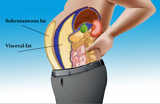 Dangers Of Visceral Fat 65
